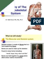 Anatomy #1 Intro. - Axial Skeleton