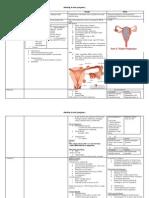 Ddx of Bleeding in Early Pregnancy