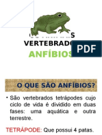 Anfíbios - Amphibia