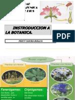 01 Las Plantas Pch (1)