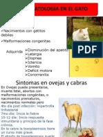 protozoosis parte 2.pptx