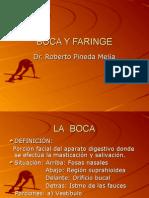 Boca y Faringe