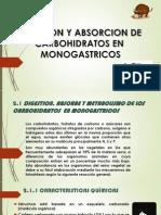 Digestion y Absorcion de Carbohidratos en Rumiantes