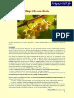 cépages et terroirs viticoles