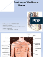 Regional Anatomy of the Human Thorax