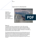 The Portuguese Man of War