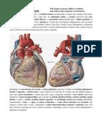 Atlas de Anatomia - Coração