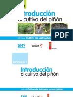 Hn Introduccion Cultivo Pinon Manual Modulo i