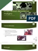 Enfermedad Del Edema Maligno