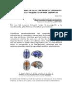 Las Estructuras de Las Conexiones Cerebrales de Hombres y Mujeres Son Muy Distintas. Sinc-t21