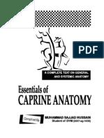 Essentials of Caprine Anatomy