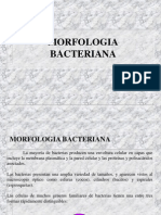 2.Morfologia_ultraestructura
