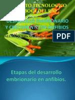 Desarrollo Embrionario y Crecimiento en Anfibios
