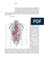 Anatomía del Cuerpo Humano SECCION 1