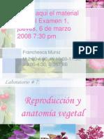 anatomia-vegetal-1204312171485682-5