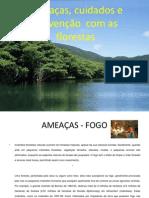 Florestas Paula 120124131519 Phpapp01