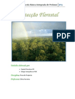 protecoflorestal-110510062902-phpapp01