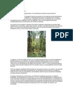 Clases de Bosques