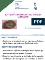63429279 Sistema Urinario Comparada 1 Nopw