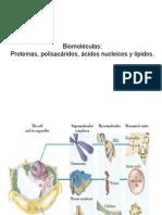 Mi Clase 4 09-10 Biomoleculas