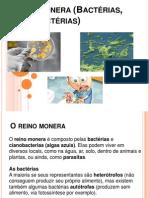 Reino Monera (Bactérias, Cianobactérias)