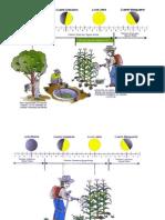 Fases de La Luna en Cultivos y Pecuarios