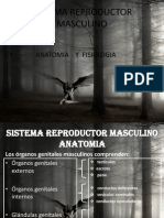 Sistema Reproductor Masculino Fisiologia2