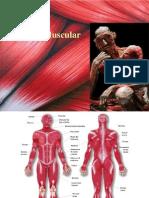 sistemamuscular-091008211404-phpapp01