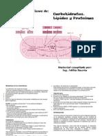 folleto_metabolismos