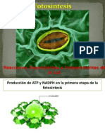 CT_Fotosíntesis
