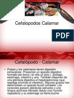 Calamar Cefalopodo