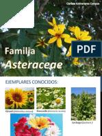Familia            Asteraceae expo.pptx
