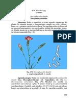 garoafa.pdf