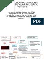 Malformaciones Congenita Del Aparato Reproductor Femenino