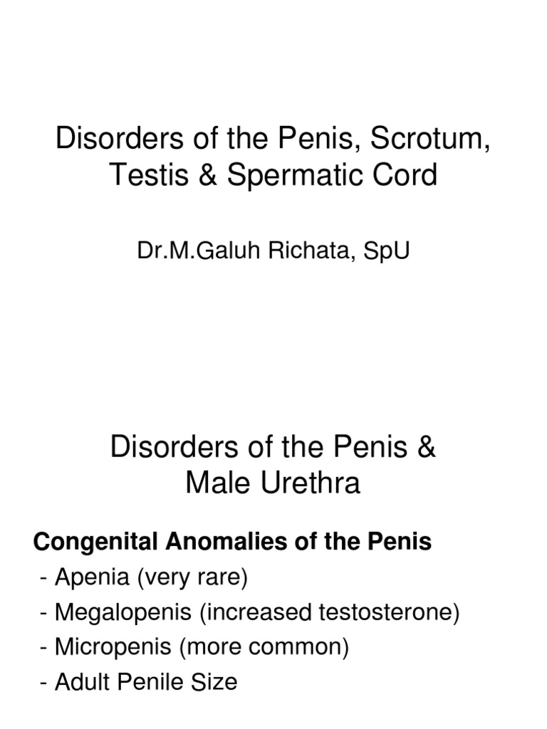 oferit penis)