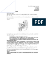 13 14 MicroscopicAnatomy Johnson MaleReproductiveSystem 11-20-13