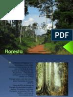floresta-110408085336-phpapp01