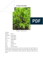 Ceriops Decandra.docx