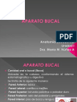 APARATOBUCALl
