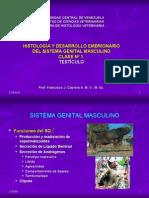 06_19 a 22 Sistema Genital Masculino