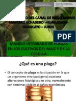Manejo Integrado de Plagas Del Cultivo Del Maiz y de Cebolla