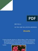 Brucella.ppt