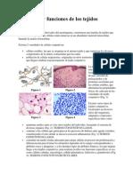 Definición y funciones de los tejidos