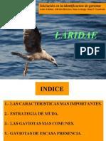 Identificacion de Gaviotas - Copia - Copia