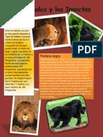 Ejemplo de Animales e Insectos