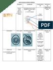 guía-1er Examen Práctico (Protozoarios, trematodos y cestodos)