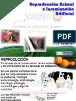 inseminacinartificial-101123163533-phpapp02.pdf