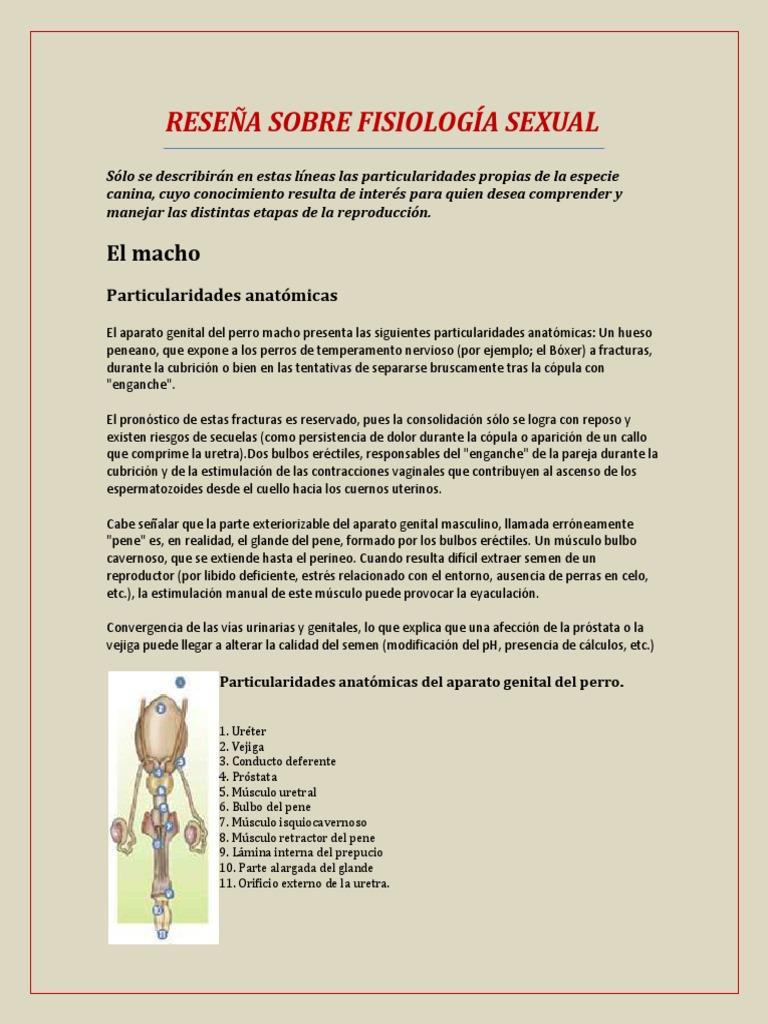 FISIOLOGÍA SEXUAL EN CANINOS