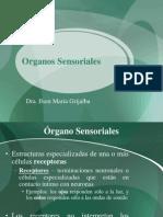 Clase No. 6 Sensaciones somáticas.ppt