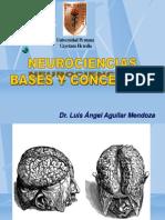 1 Neurociencia 2013 Bases y Conceptos